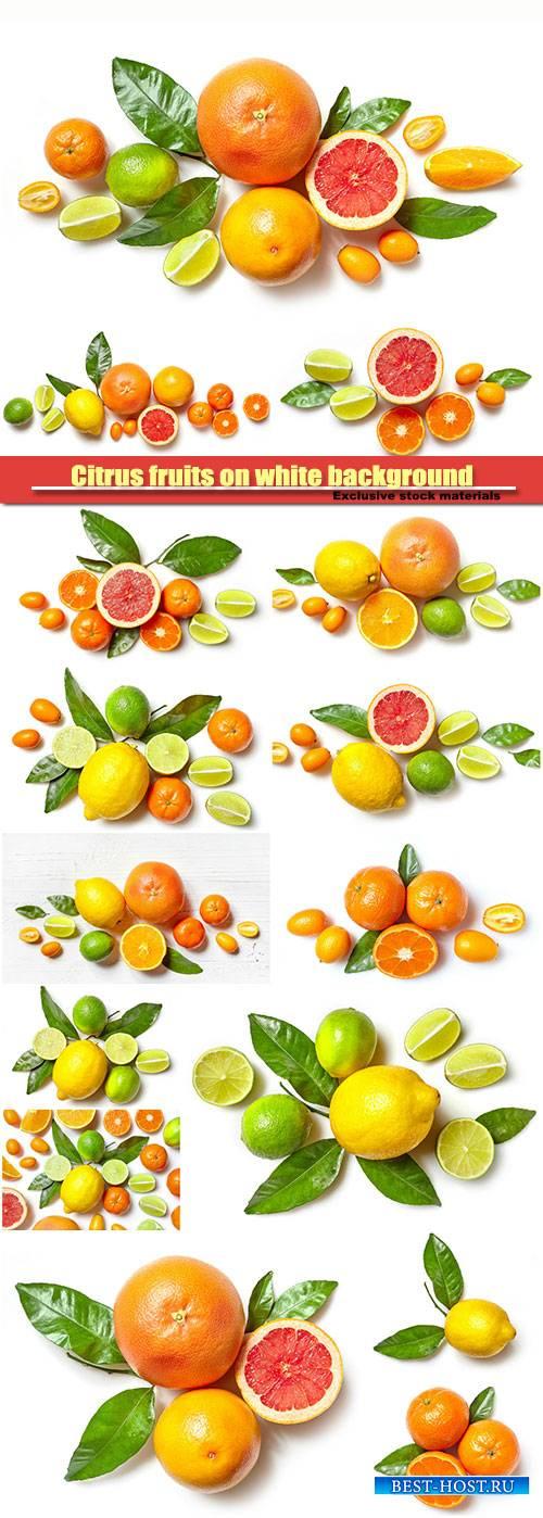 Citrus fruits on white background