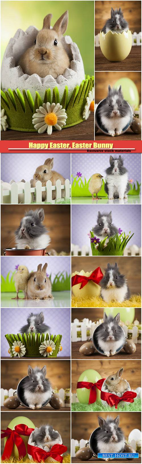 Happy Easter, Easter Bunny