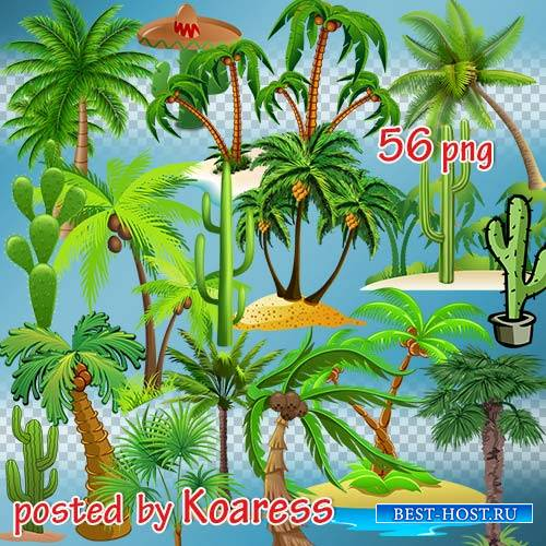 Png клипарт на прозрачном фоне - Нарисованные пальмы, кактусы, тропические  ...