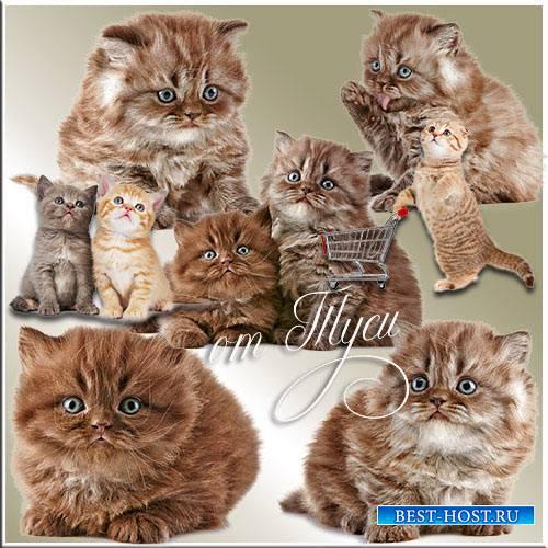 Котята - Клипарт