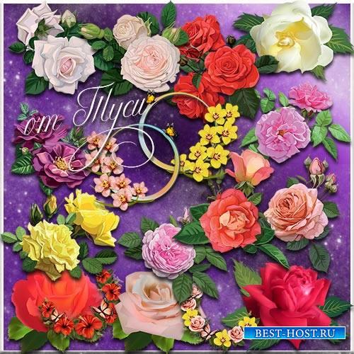 Розы бархатный лепесток - Клипарт