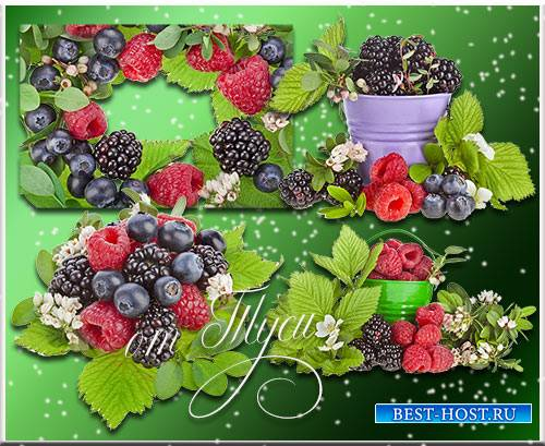 Лесные ягоды - Клипарт