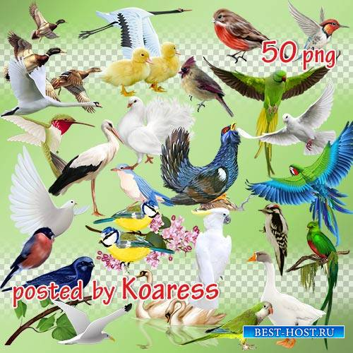 Png клипарт - Разнообразные птицы на прозрачном фоне