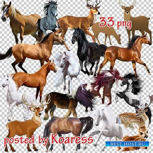 Png клипарт на прозрачном фоне - Олени и лошади