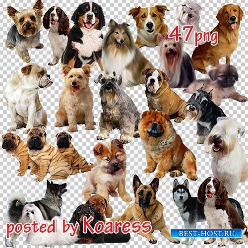Png клипарт для дизайна - Собаки и щенки разнообразных пород