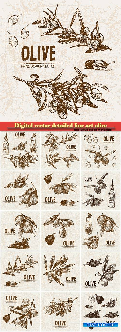 Digital vector detailed line art olive