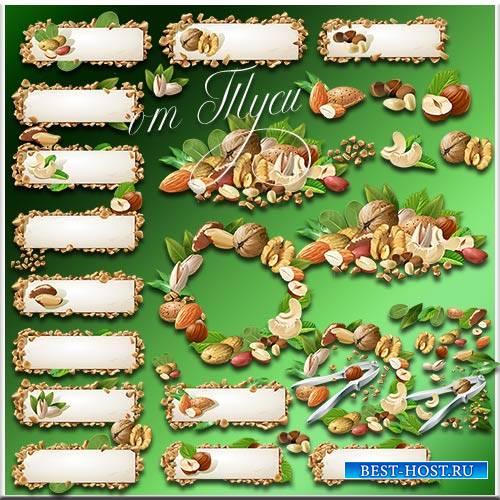 Ореховое изобилие - Клипарт