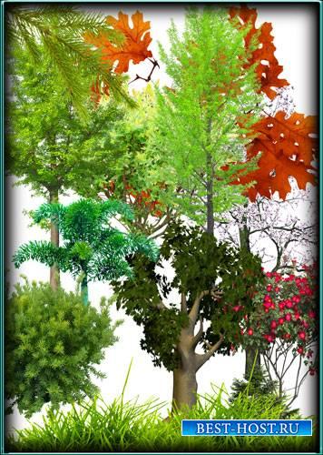 Большая колекция Клипартов - Деревья, растения, кусты