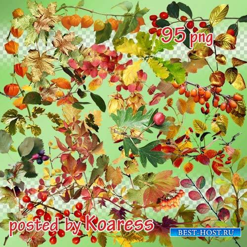 Png клипарт на прозрачном фоне - Осенние листья, ветки, ягоды