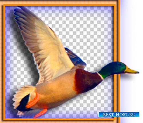 Фотошоп png - Домашние и дикие птицы