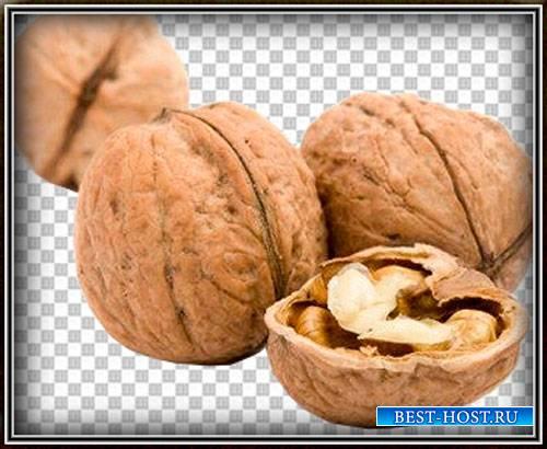 Картинки png - Лесные и грецкие орехи