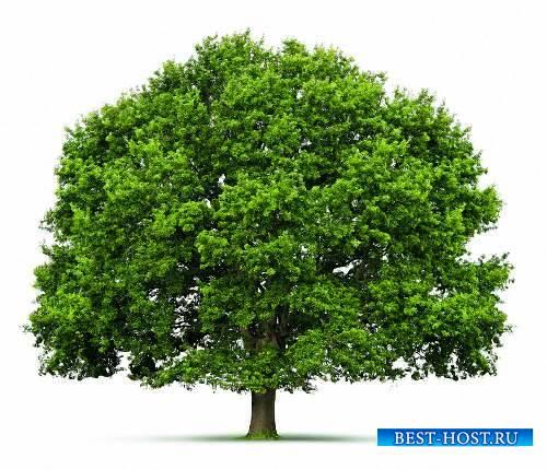 Картинки в формате png - Деревья