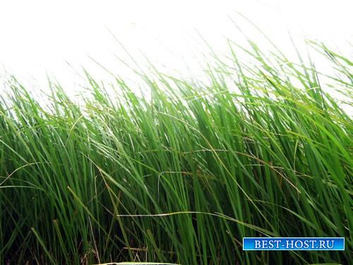 Картинки в формате png - Зеленая трава