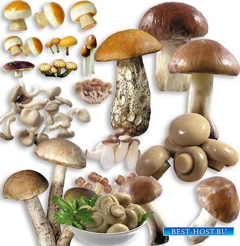 Картинки на прозрачном фоне - Разные грибы