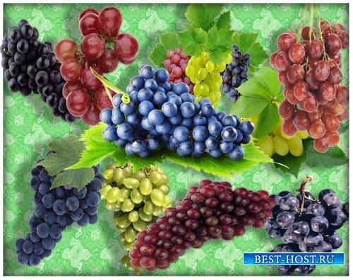 Картинки на прозрачном фоне - Виноградные кисти