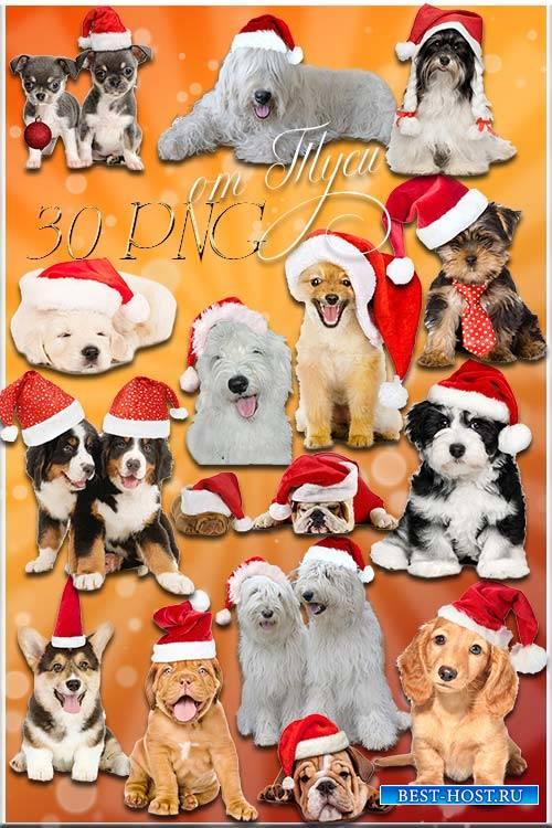 Клипарт - Новогодние собаки в Год Собаки