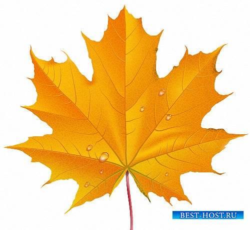 Клипарты Png - Осенние листья