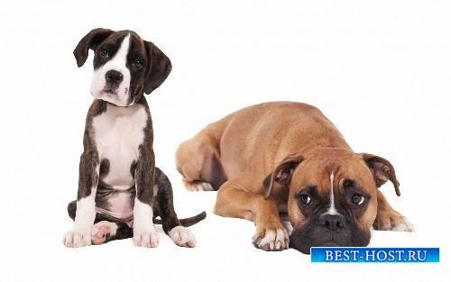 Картинки png - Веселые собаки