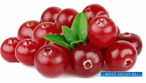 Лучшие клипарты - Красные ягоды