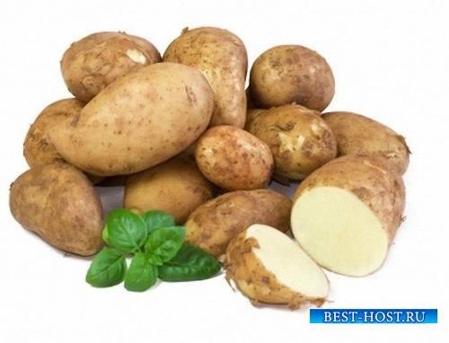 Png для фотошопа на прозрачном фоне - Картошка разных сортов