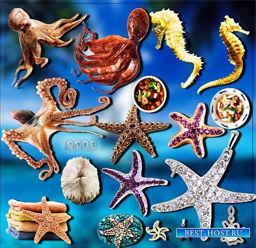 Красивые png - Жители моря