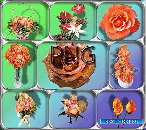 Растровые клипарты - Оранжевые розы