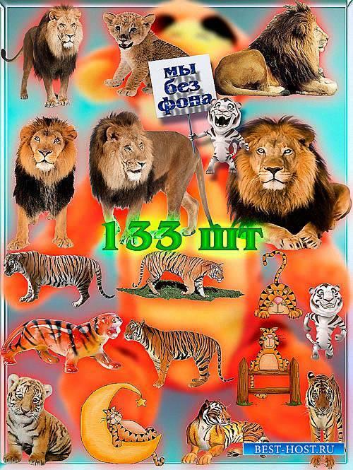 Новые клипарты Png - Львы и тигры
