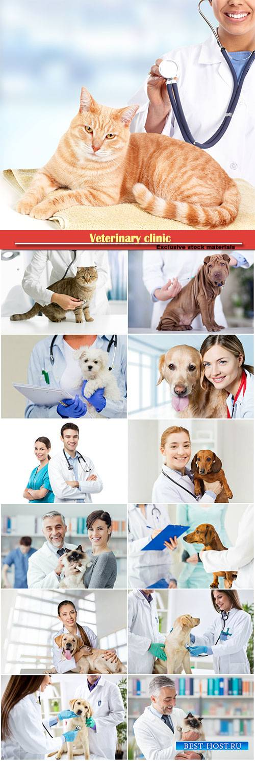 Veterinary clinic, a doctor is examining the pet