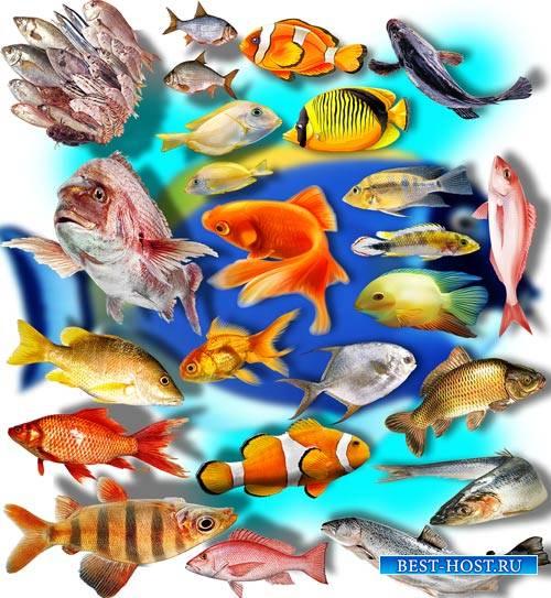 Png на прозрачном фоне - Рыбное ассорти