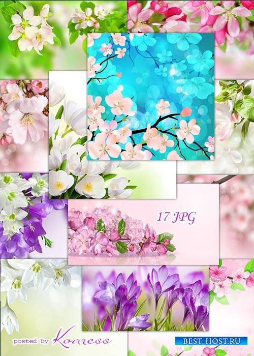 Подборка цветочных jpg фонов для дизайна - Весенние цветы