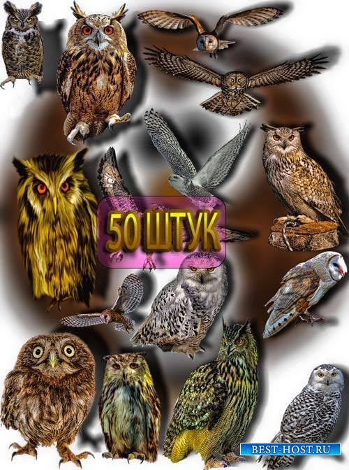 Коллекция Png клипартов - Ночные совы