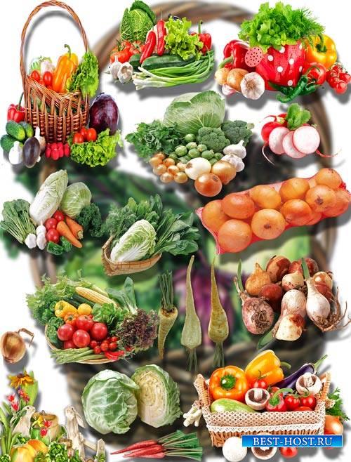Коллекция Png клип-артов - Урожай с огорода