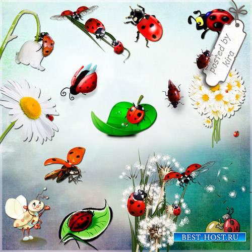 Клипарт - Божьи коровки или Ladybug