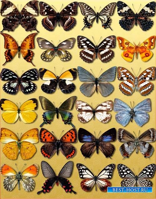 Фотошоп Png клипарты - Декоративные бабочки