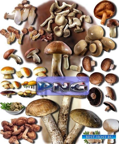 Клипарты картинки - Съедобные грибы