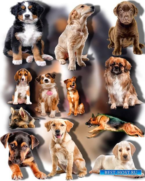 Png Клип-арты - Породистые собаки