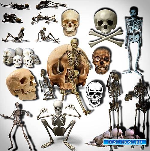 Новые клип-арты Png - Черепа и кости