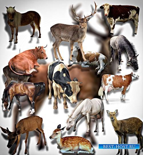 Клип-арты для фотошопа на прозрачном фоне - Животные