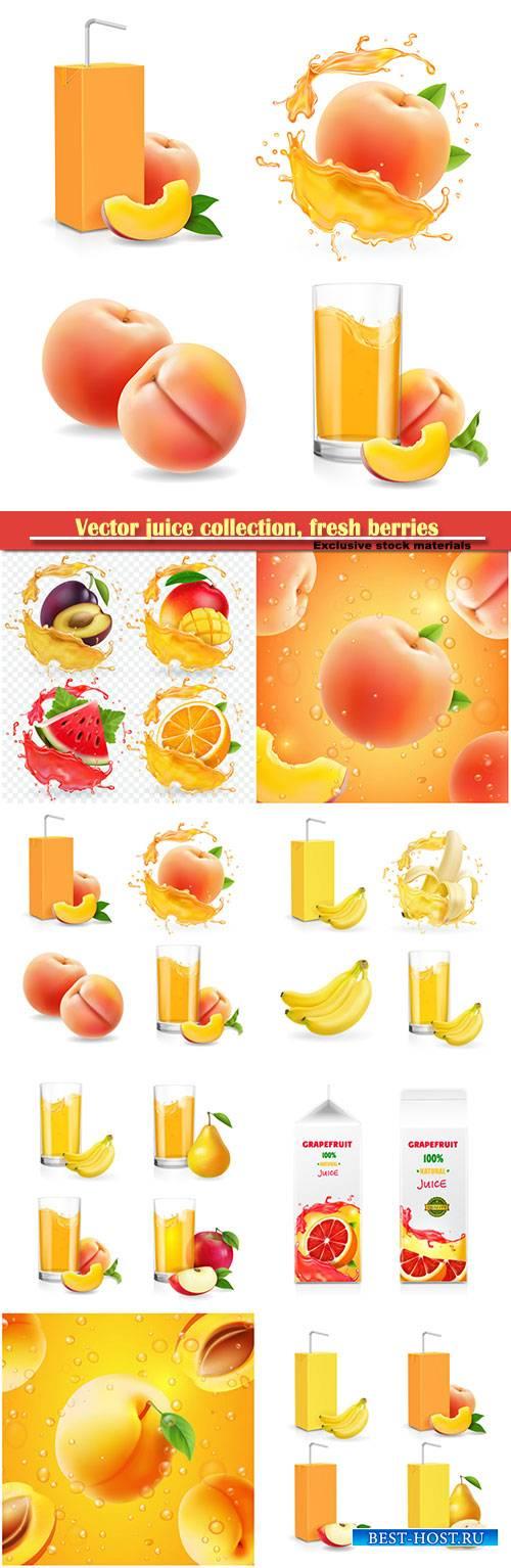 Vector juice collection, fresh berries packaged juice or jam logotype