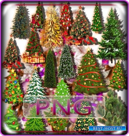 Клипарты на прозрачном фоне - Новогодние елки