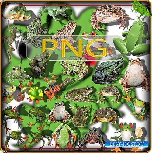 Клип-арты для фотошопа на прозрачном фоне - Лягушки и жабы