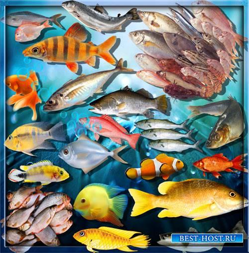 Качественные клипарты - Рыба