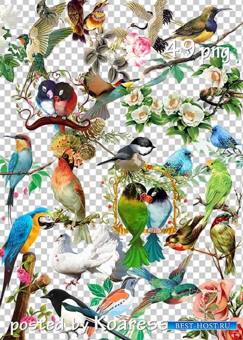 Подборка клипарта в png - Цветы и птицы