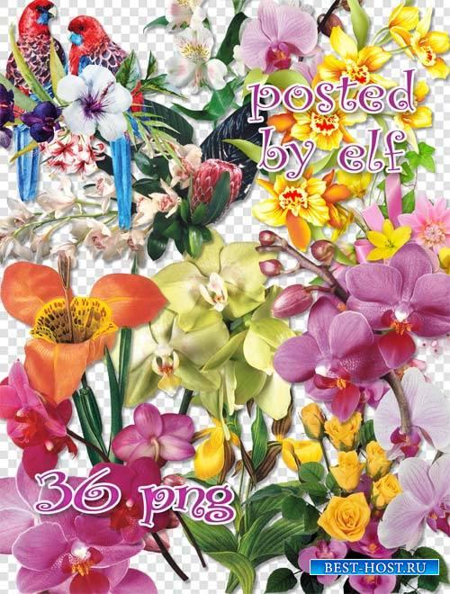 Прекрасные орхидеи - клипарт без фона
