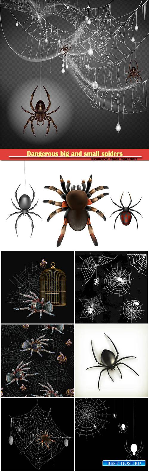 Dangerous, poisonous big and small spiders hanging on thin web string in 3d ...