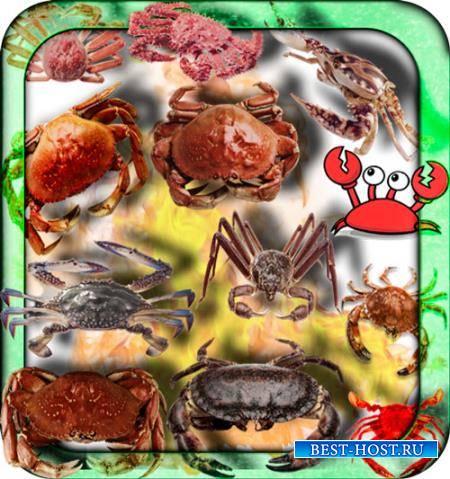 Прозрачные клипарты для фотошопа - Морские крабы