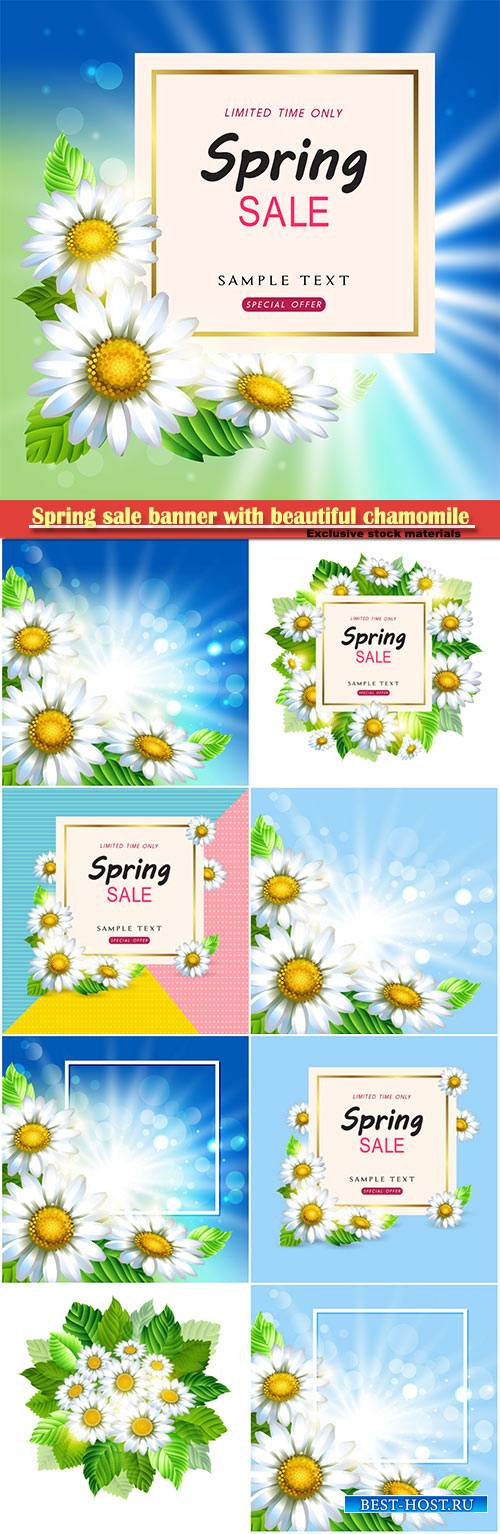 Spring sale banner with beautiful chamomile vector illustration