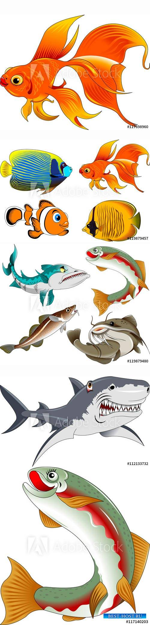 Collection of beautiful fish in a vector and illustration