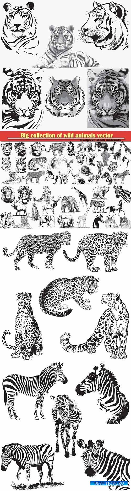 Big collection of wild animals vector illustration