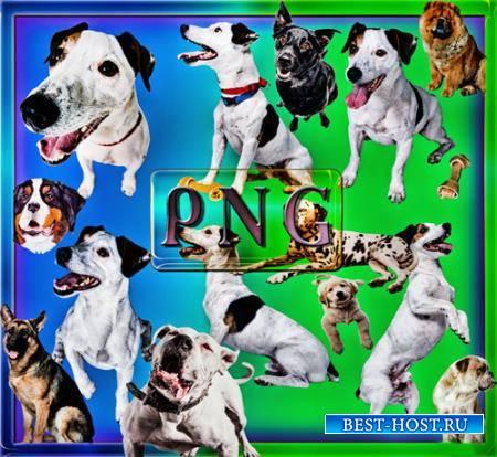 Клипарты для фотошопа - Собаки разных пород